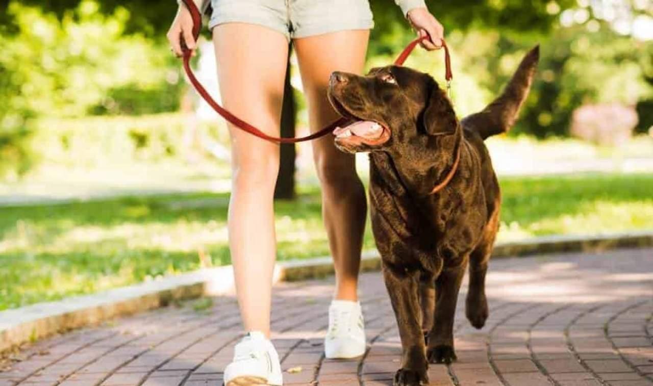 ¿Por qué mi perro tira de la correa?