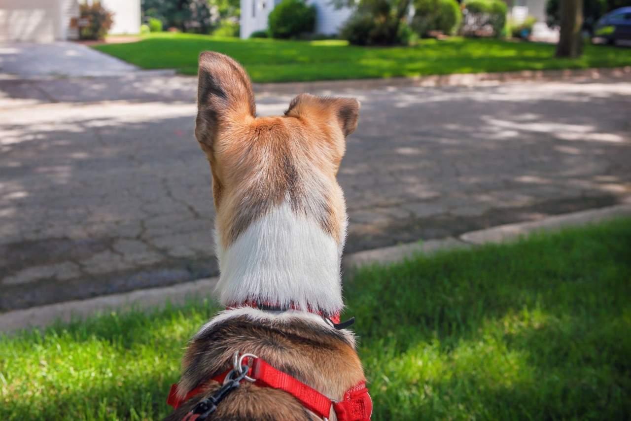 Qué arnés es mejor para que el perro no tire: We love pets