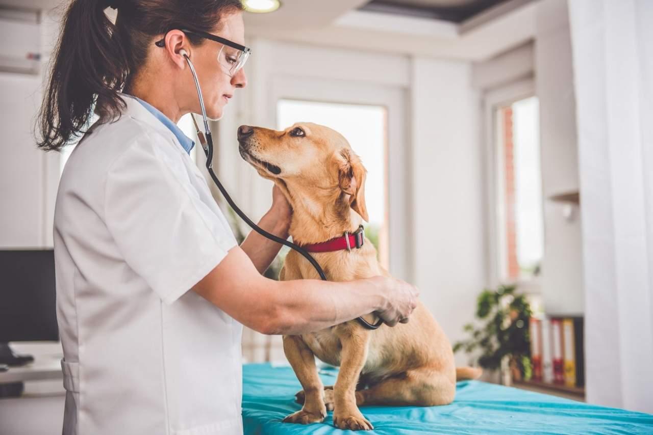 PetClinic, el software veterinario que optimiza la gestión de datos