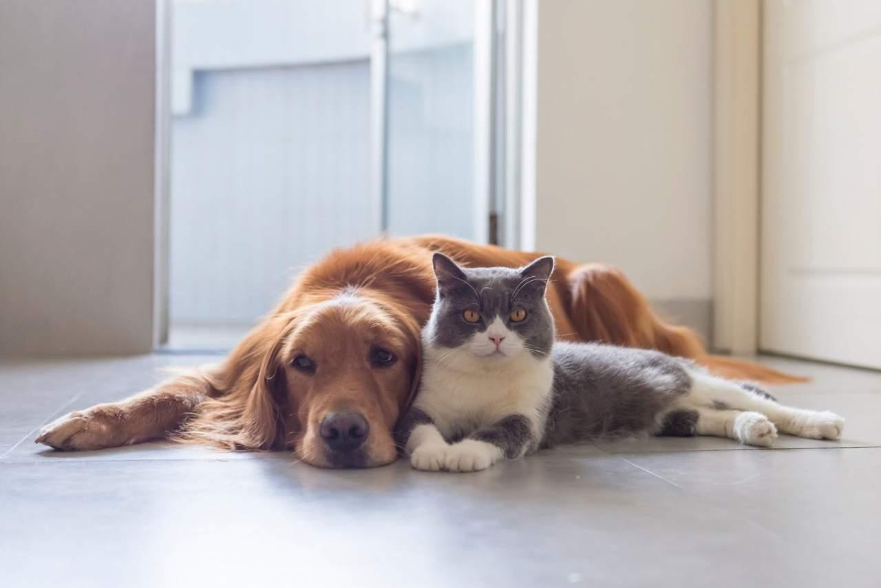 Aumentan las visitas veterinarias en Algeciras según Clínica Veterinaria El Estrecho